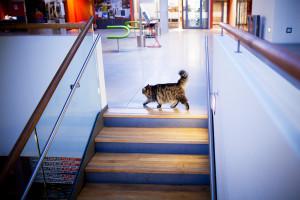 SIB-katten  kilde: Studvest